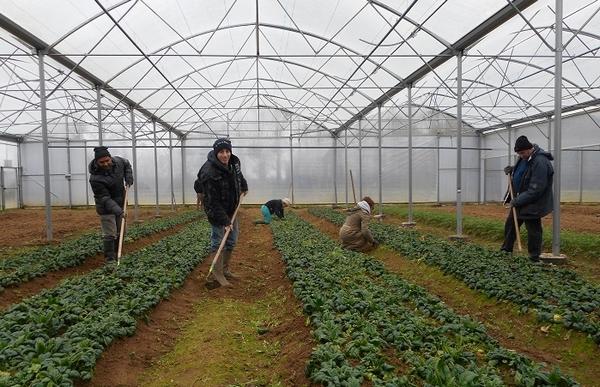 Les jardins de cocagne cultiver des l gumes bio pour une for Les jardins de cocagne