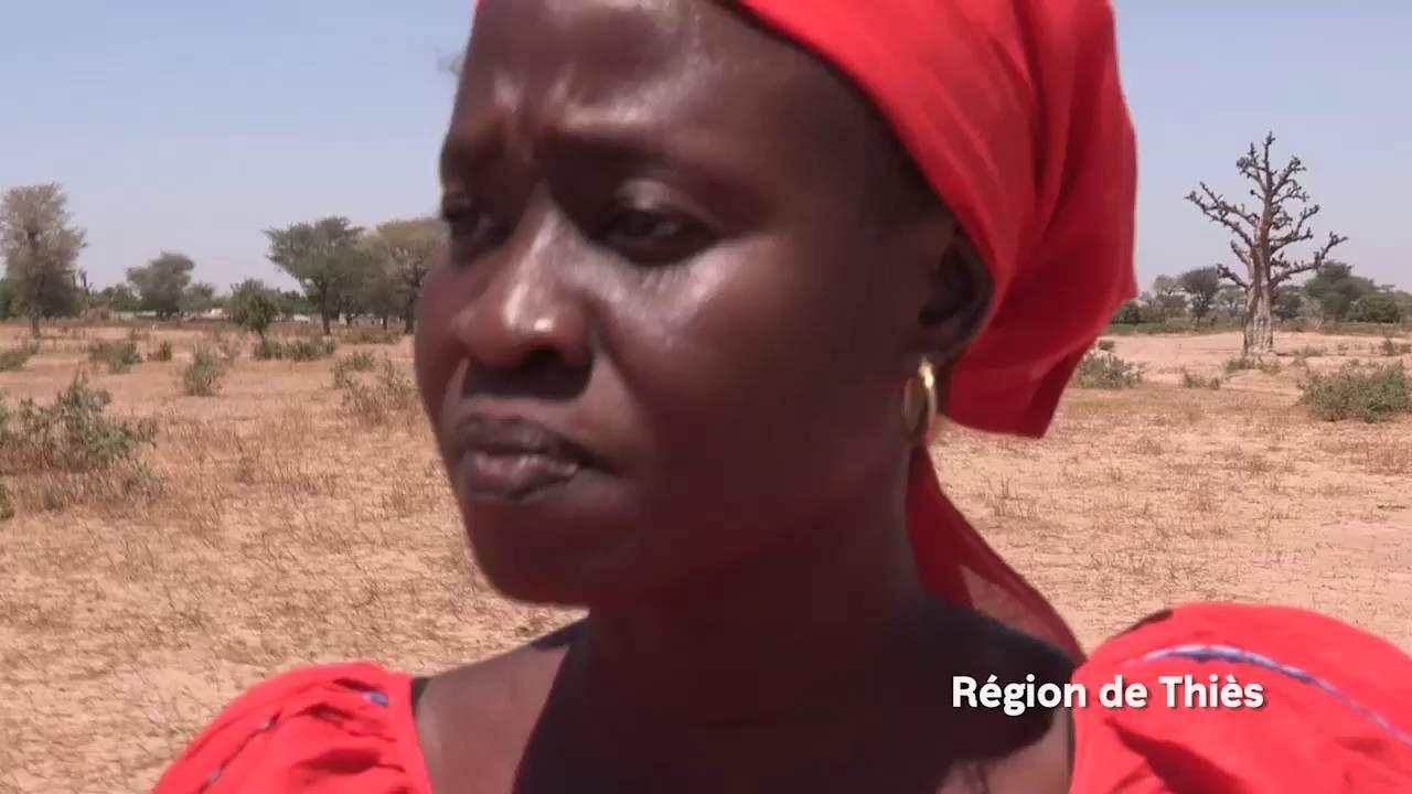 Agriculture familiale : soutenir les productions familiales au Sénégal